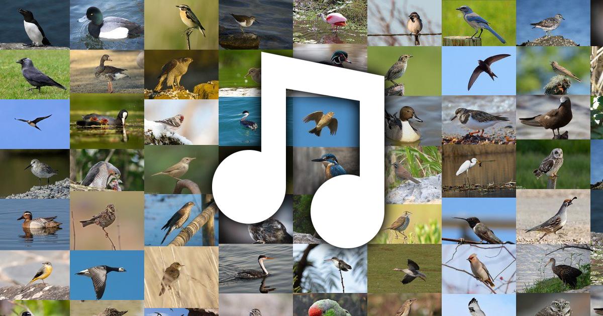 canti uccelli mp3 da